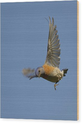 Dive Bomber Wood Print by Jean Noren