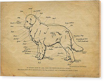Doggy Diagram Wood Print by Tom Mc Nemar