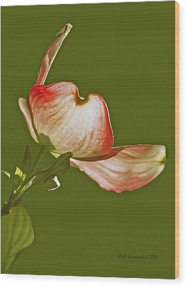 Wood Print featuring the photograph Dogwood Blossom In Spring by A Gurmankin