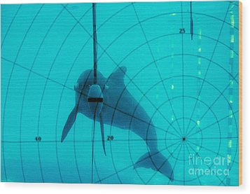 Dolphin Experiment Wood Print by James L. Amos