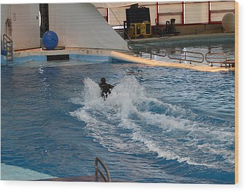 Dolphin Show - National Aquarium In Baltimore Md - 1212245 Wood Print by DC Photographer