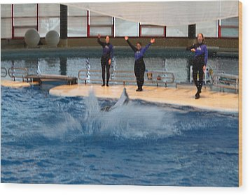 Dolphin Show - National Aquarium In Baltimore Md - 1212278 Wood Print by DC Photographer