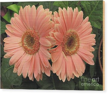 Double Delight - Coral Daisies Wood Print by Dora Sofia Caputo Photographic Art and Design