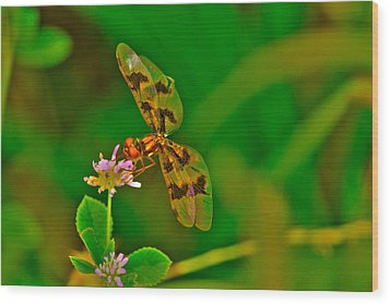 Dragonfly And Flower Wood Print by Lorri Crossno