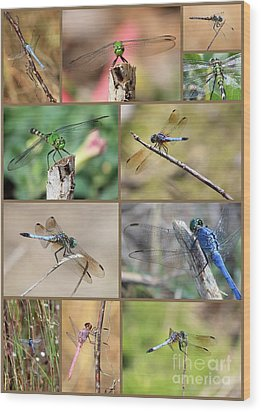 Dragonfly Collage 3 Wood Print by Carol Groenen