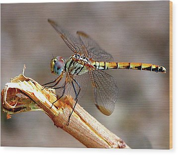 Dragonfly Wood Print by Graham Taylor