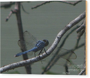 Dragonfly Wood Print by Greg Patzer