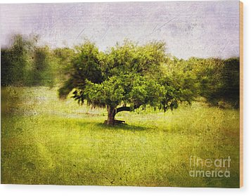 Dreamland Wood Print by Scott Pellegrin