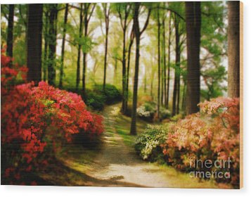 Dreamy Path Wood Print by Lois Bryan