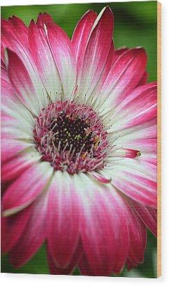 Dsc240d Wood Print by Kimberlie Gerner