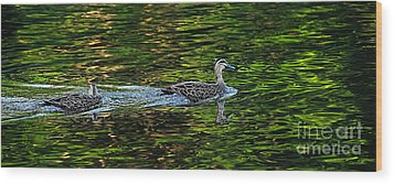 Ducks On Green Reflections - Panorama Wood Print by Kaye Menner