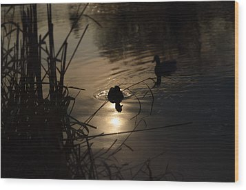 Ducks On The River At Dusk Wood Print by Samantha Morris