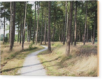 Dutch Country Bicycle Path Wood Print by Carol Groenen