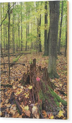 Early Autumn Woods Wood Print by Michele Steffey
