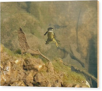 Eastern Newt In A Shallow Pool Of Water Wood Print by Chris Flees