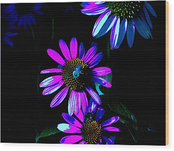 Echinacea Hot Blue Wood Print by Karla Ricker