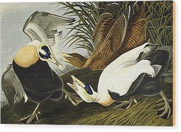 Eider Ducks Wood Print by John James Audubon