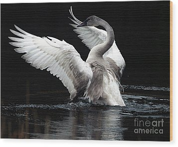 Elegance In Motion 2 Wood Print by Sharon Talson