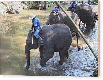 Elephant Baths - Maesa Elephant Camp - Chiang Mai Thailand - 01131 Wood Print by DC Photographer