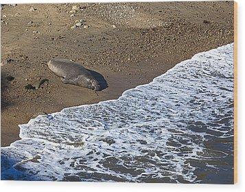 Elephant Seal Sunning On Beach Wood Print by Garry Gay