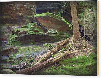 Enchanting Wood Print by J Allen