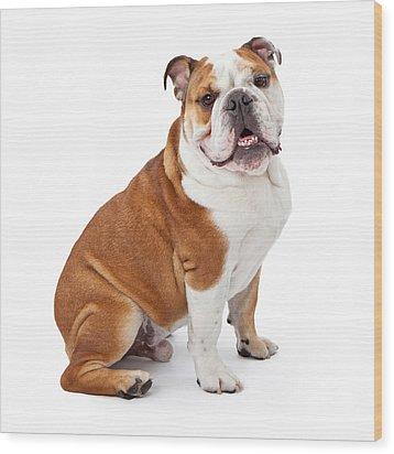 English Bulldog Sitting  Wood Print by Susan Schmitz