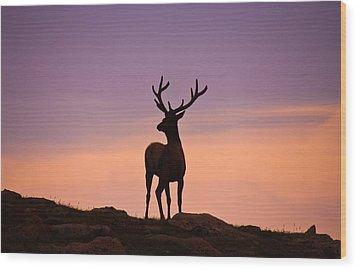 Enjoying The View Wood Print by Darren  White