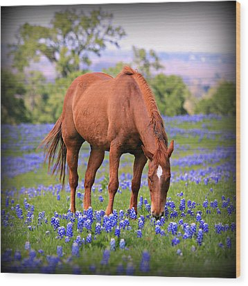 Equine Bluebonnets Wood Print by Stephen Stookey