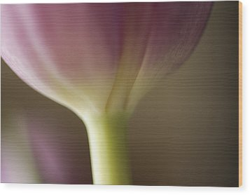 Ethereal Curvature Wood Print by Christi Kraft
