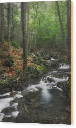 Ethereal Forest Wood Print by Bill Wakeley