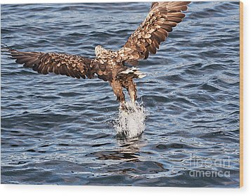 European Fishing Sea Eagle 2 Wood Print by Heiko Koehrer-Wagner