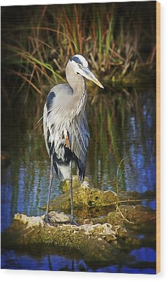 Everglades Blue Wood Print by Marty Koch