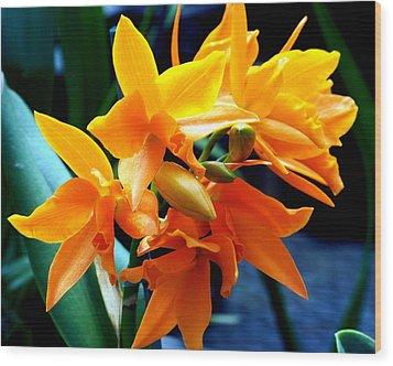 Exotic Orange Wood Print by Karen Wiles