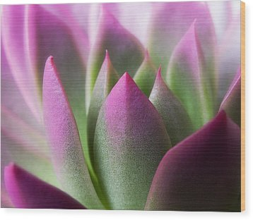 Exotic - Pink Purple Green Flower Landscape Photograph Wood Print by Artecco Fine Art Photography