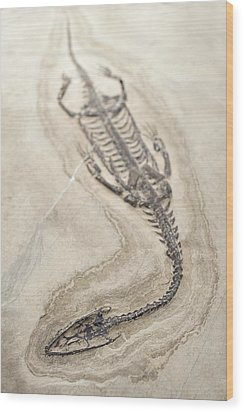 Extinct Triassic Reptile Wood Print by Science Photo Library