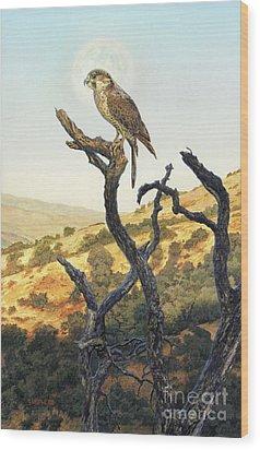 Falcon In The Sunset Wood Print by Stu Shepherd
