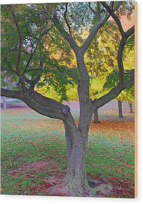 Fall Color Wood Print by Lisa Phillips