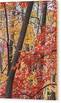 Fall In The Forest Wood Print by John Haldane