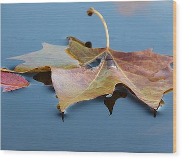 Fall Reflections Wood Print by Jane Ford