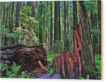 Fallen Giant Wood Print by Benjamin Yeager
