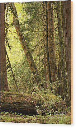 Falling Trees In The Rainforest Wood Print by Carol Groenen