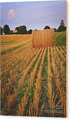 Farm Field With Hay Bales At Sunset In Ontario Wood Print by Elena Elisseeva