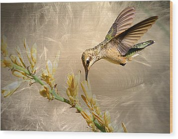 Feathers Wood Print by Donna Kennedy