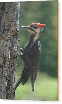 Female Pileated Woodpecker Wood Print by Sandra Updyke