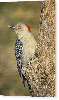 Female Red-bellied Woodpecker Wood Print by Bill Wakeley
