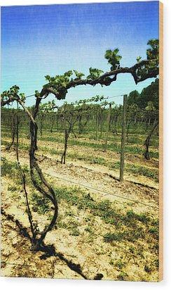 Fenn Valley Vineyards Wood Print by Michelle Calkins