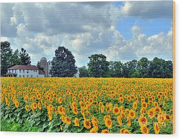 Field Of Sunflowers Wood Print by Kathleen Struckle