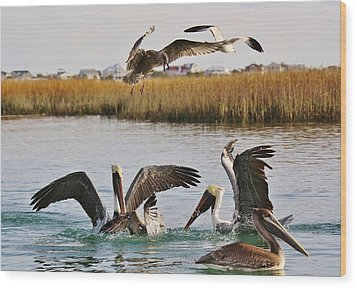 Fighting For A Fish Dinner Wood Print by Paulette Thomas