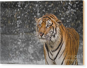 Final Drops Wood Print by Ashley Vincent
