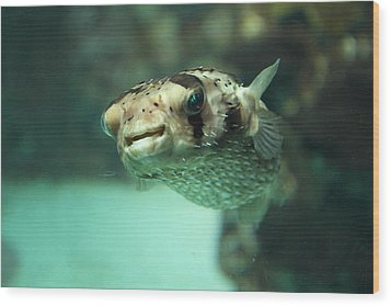 Fish - National Aquarium In Baltimore Md - 1212135 Wood Print by DC Photographer